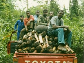 thumb Cameroun Mom Dibang CPSS transport plants bananiers 1989